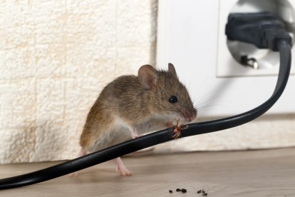 Pest Control in Westcombe Park, SE3. Call Now! 020 8166 9746