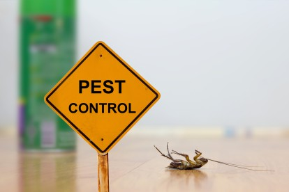 Pest Contol in Westcombe Park, SE3. Call Now 020 8166 9746